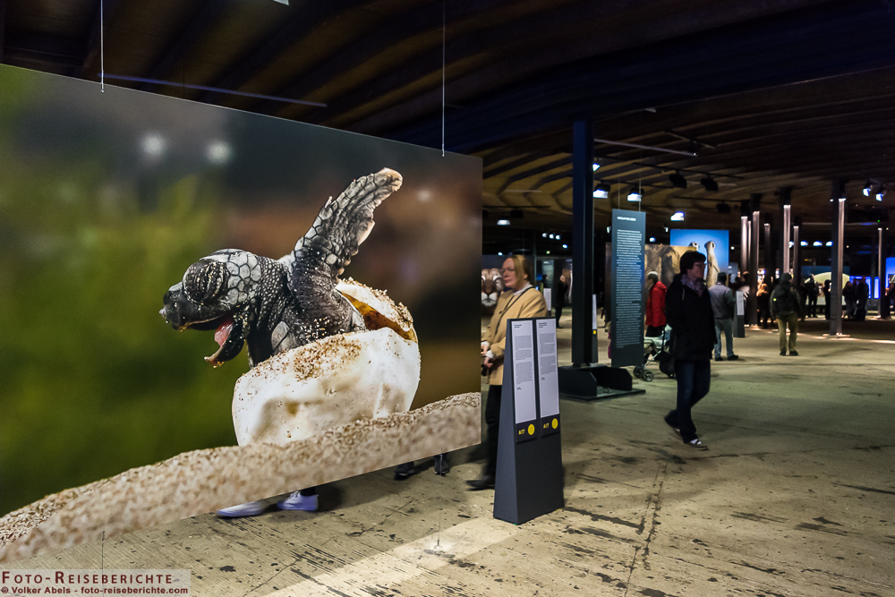 Austellung - Wunder der Natur 02