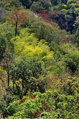 Dschungel in Nordthailand © Volker Abels