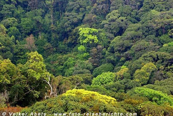 Dschungel im Doi Inthanon Nationalpark bei Chiang Mai - Thailand © Volker Abels