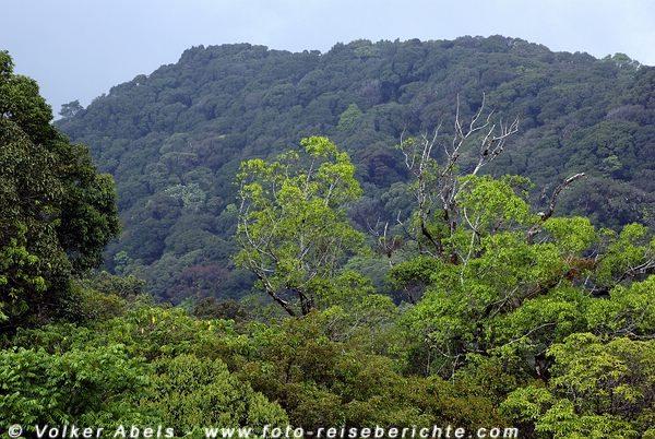 Dschungellandschaft im Norden von Thailand © Volker Abels