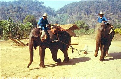 Elefanten in einem Elefantencamp bei Chiang Mai, Thailand © Volker Abels