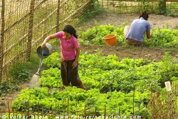 Gartenarbeit am Khan-Fluss bei Luang Prabang - Laos © Volker Abels