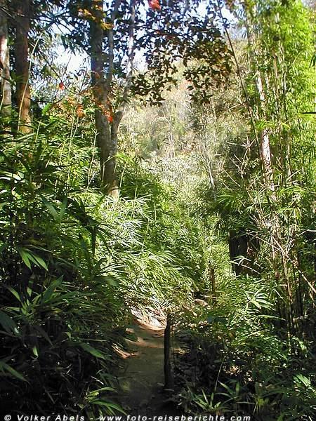 Dschungel in Thailand nördlich von Chiang Mai © Volker Abels