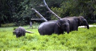 Wilde Elefanten im im Lahugala-Nationalpark, Sri Lanka © Volker Abels
