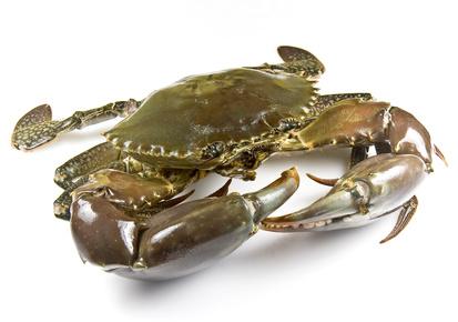 So, oder ähnlich sah die Krabbe aus, die ich verspeisen durfte. Foto: © Downunderphoto - Fotolia.com