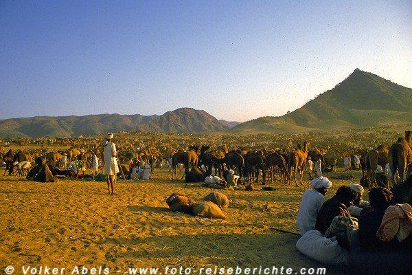 Kamelzüchter mit ihren Tieren in Pushkar in  Rajasthan - Indien © Volker Abels