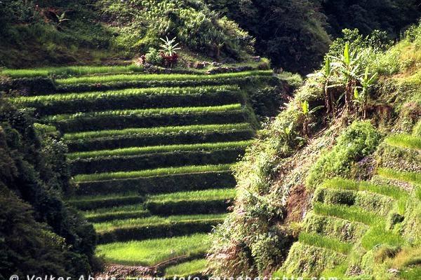 Reisterassen im Bereich Banaue/Batad - Luzon, Philippinen © Volker Abels