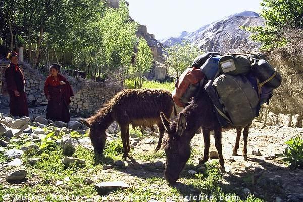 Diese Esel tragen unser Gepäck © Volker Abels
