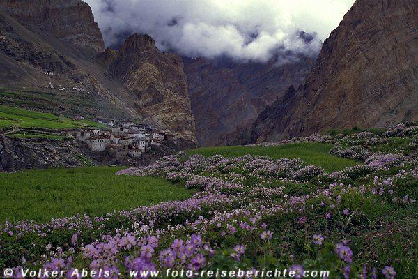 Farbklecks im Grau der Berghänge: bunte Blumenbänder in Gerstefeldern. © Volker Abels
