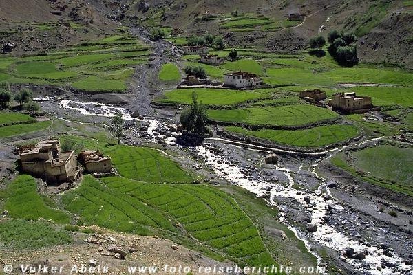 Häuser aus Lehm stehen zwischen Gerste- und Erbsenfelder Linghsed, Ladakh © Volker Abels