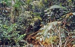 Dschungel in Asien © Volker Abels