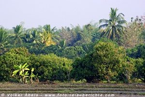 Palmen und tropische Pflanzen © Volker Abels