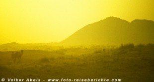 Kamelführer mit einem Tier im Sonnenlicht - Indien © Volker Abels