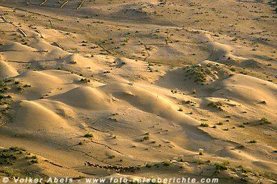 Dromedare in Wüstenlandschaft © Volker Abels