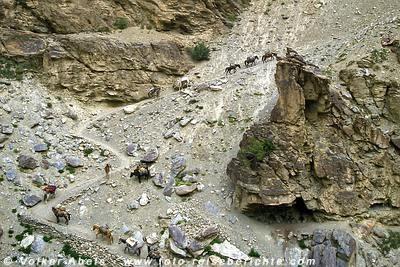 Pferde-Karawane in Ladakh © Volker Abels