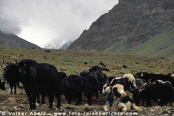 In der Nähe des Lager rasten die Tiere © Volker Abels