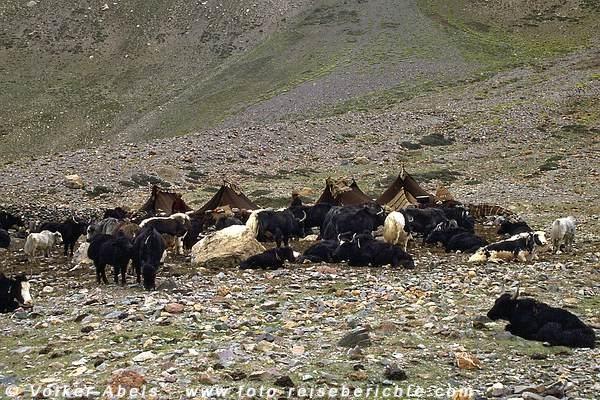 Das Zeltlager der Yakhirten - Zanskar © Volker Abels