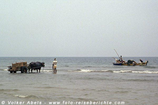 Fischerboote steuern auf den Karren zu - Malaysia bei Kuantan © Volker Abels