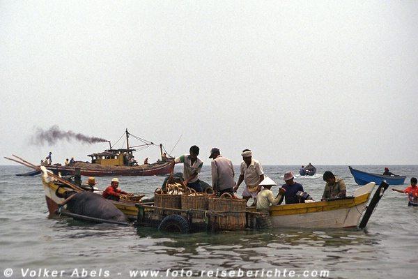 Die Fische werden auf den Karren geladen - Malaysia bei Kuantan © Volker Abels