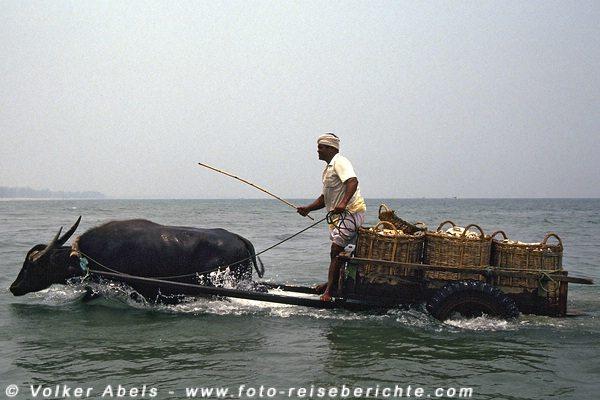 Voll beladen geht es zurück zum Ufer  - Malaysia bei Kuantan © Volker Abels