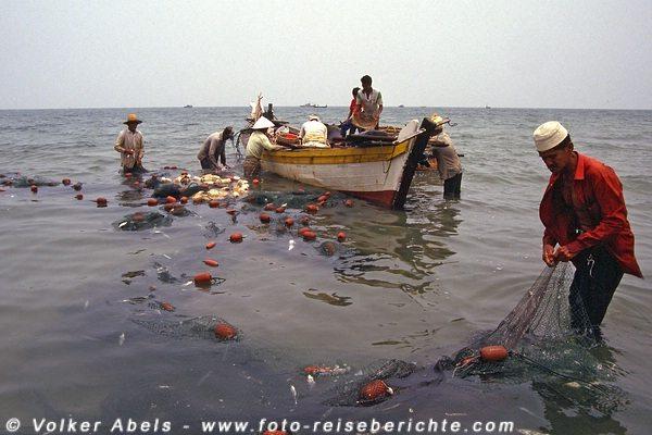Letzte Fische werden aus den Netzen gelöst - Malaysia bei Kuantan © Volker Abels