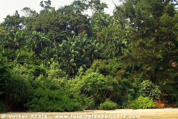 Dschungel wächst bis an den Strand - Bako Nationalpark, Sarawak, Borneo - Malaysia © Volker Abels