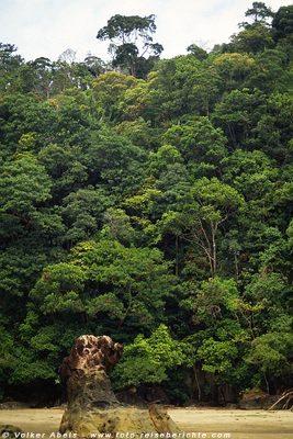 Der Dschungel reicht bis an den Strand - Bako Nationalpark, Sarawak, Borneo, Malaysia © Volker Abels
