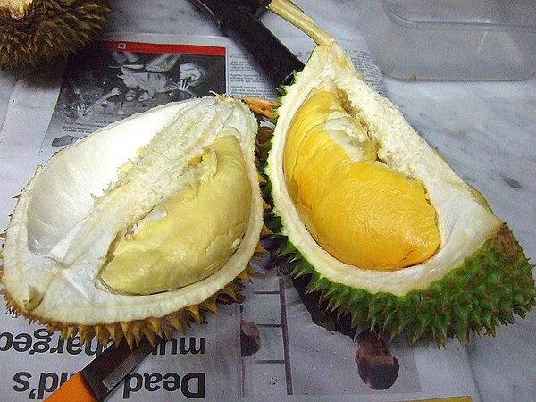 By Yun Huang Yong from Harbord, Australia (Two varieties of Durian) [CC-BY-SA-2.0 (www.creativecommons.org/licenses/by-sa/2.0)], via Wikimedia Commons