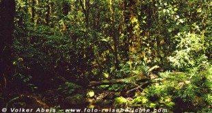 Im Dschungel von Sarawak - Borneo © Volker Abels