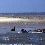 Seehunde in der Nordsee bei Neuharlingersiel
