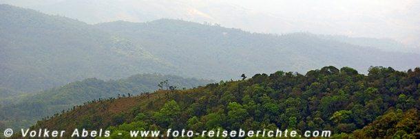 Dschungel in Thailand © Volker Abels