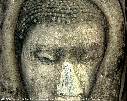 Buddhakopf in Ayuttha © Volker Abels