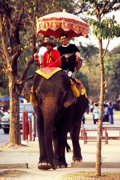 Elefant mit Touristen - Ayutthaya © Volker Abels