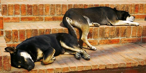 Schlafende Hunde © Volker Abels