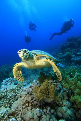 Wasserschildkröte und Taucher © Richard Carey - Fotolia.com