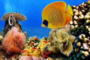 Foto einer Korallenkolonie © vlad61_61 - Fotolia.com