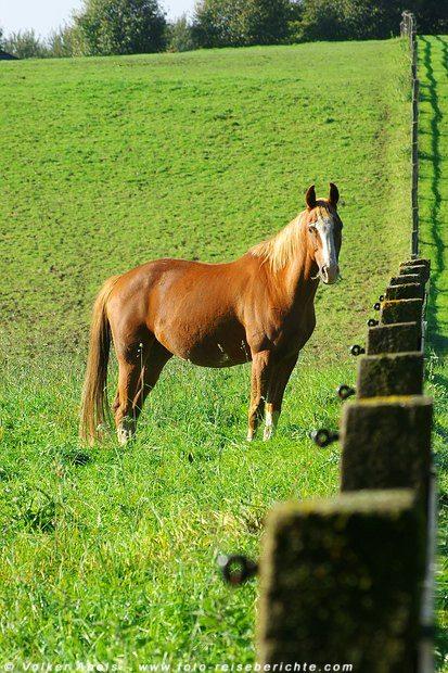 Photo of Foto der Woche – Pferd auf einer Koppel im Bergischen Land – Nordrhein Westfalen