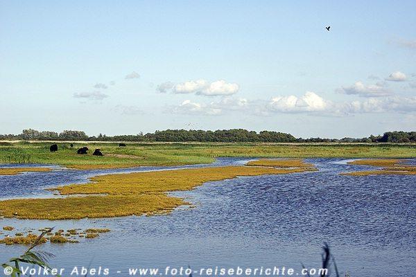 NABU Wasservogelreservat Wallnau Fehmarn © Volker Abels - www.foto-reiseberichte.com
