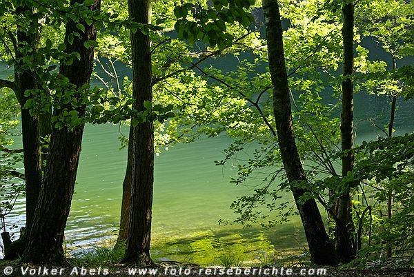 Photo of Foto der Woche – Bäume an einer Talsperre