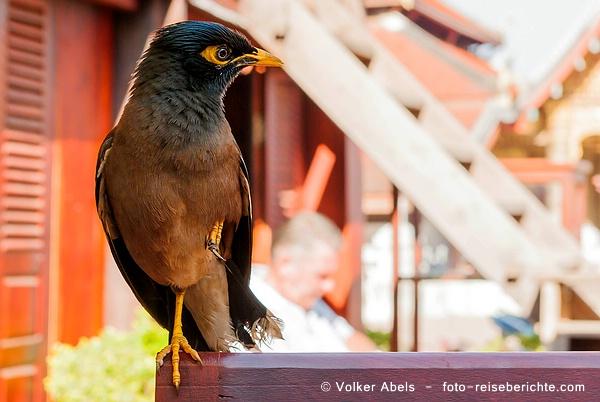 Photo of Foto der Woche – Frühstück klauender Vogel in Luang Prabang – Laos