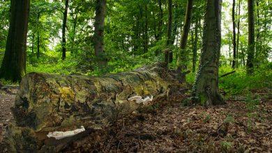 Photo of Zerfallender Baumstamm in einem Wäldchen
