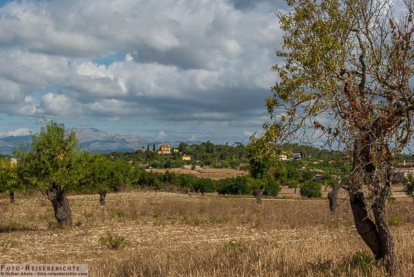 Photo of Landschaft im Inneren der Insel Mallorca