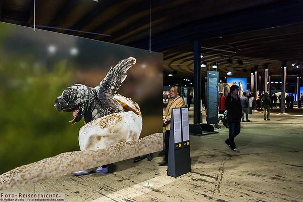 Austellung - Wunder der Natur