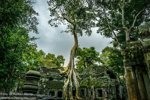 Tempel Ta Prohm in Kambodscha - foto-reiseberichte.com