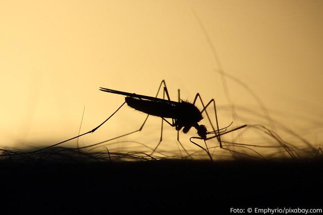 Photo of Moskitoschutz – Schutz vor Moskitos und Mücken