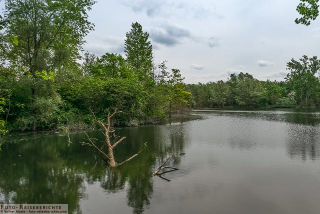Gewässer im Naturschutzgebiet Bislicher Insel_01 - © Volker Abels www.foto-reiseberichte.com