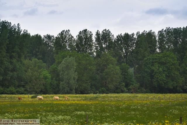 Landschaft auf der Bislicher Insel_01 - © Volker Abels www.foto-reiseberichte.com