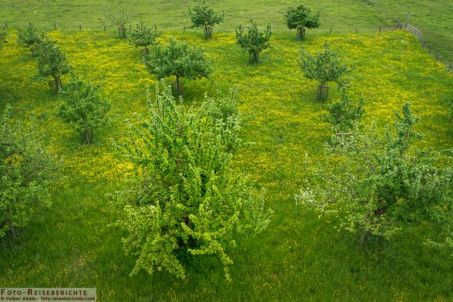 Obstbäume- Bislicher Insel_01 - © Volker Abels www.foto-reiseberichte.com
