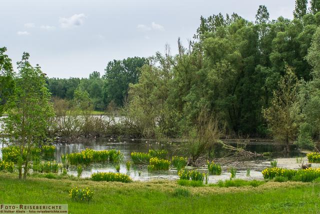 Teich auf der Bislicher Insel_01-© Volker Abels www.foto-reiseberichte.com