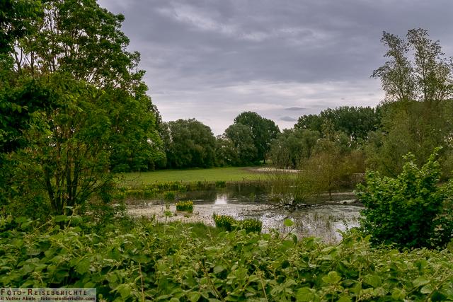 Teichlandschaft im Naturschutzgebiet- Bislicher Insel - © Volker Abels www.foto-reiseberichte.com